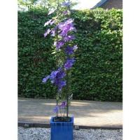 NIEUWE plantensteunen draadrekken klimplantsteunen  (te koop